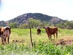 Ranch april 2012 372