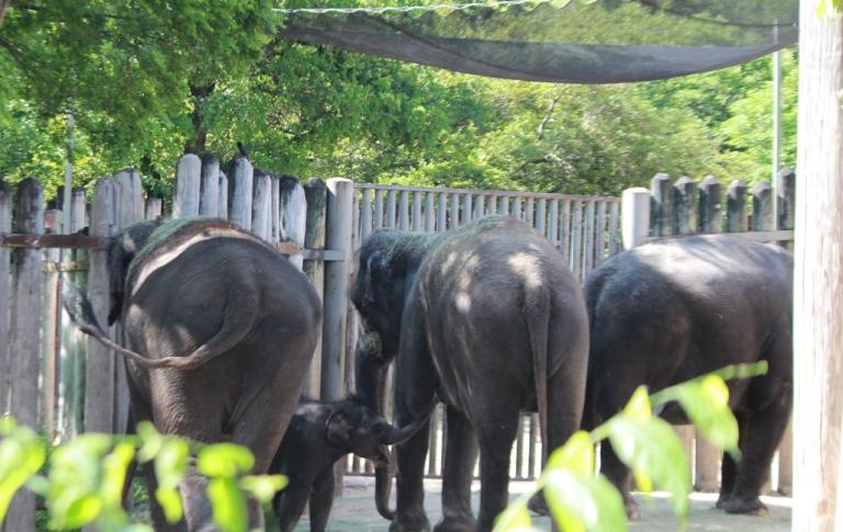 Baby Elephants Fort Worth Zoo