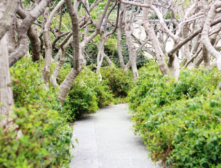 Enchanted Pathways to Explore