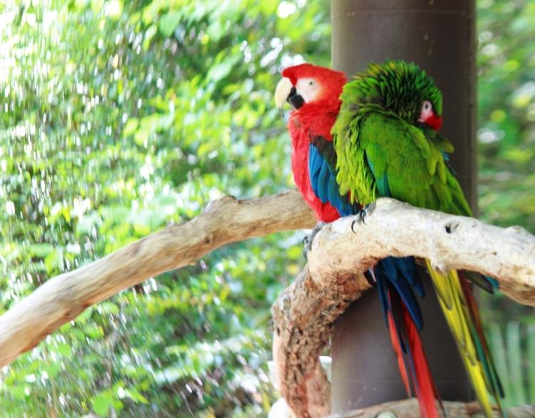Fort Worth Zoo Birds