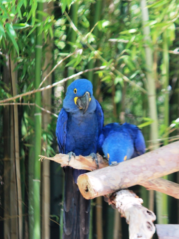 Fort Worth Zoo Blue