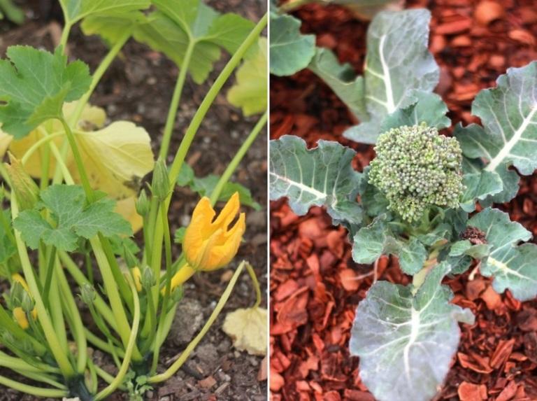 Garden Edibles 2